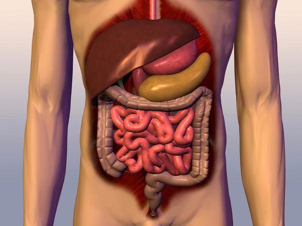 digestive-system_920_600x450